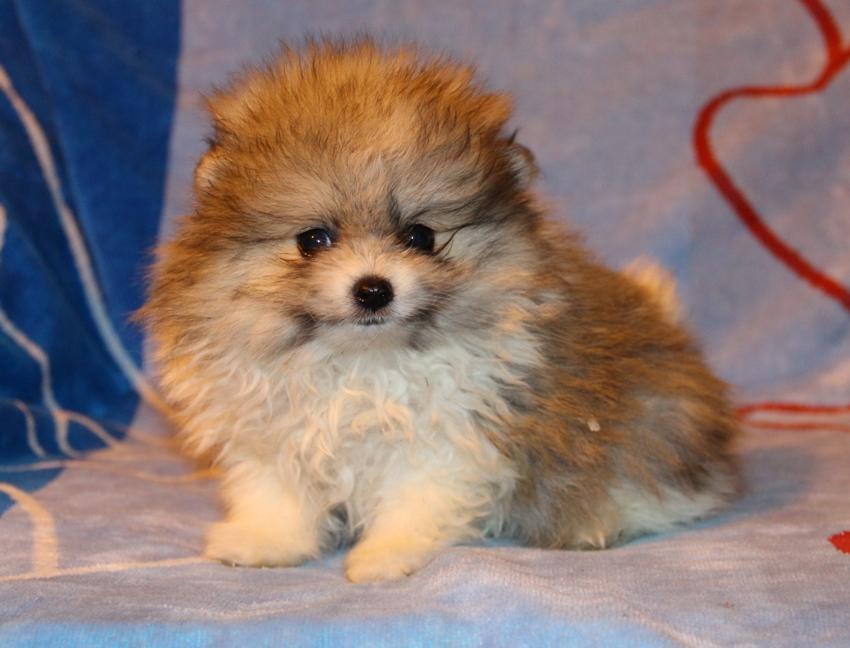Дать бесплатно объявление о продаже собаки в саратове подать объявление купить редуктор в минске на бмв